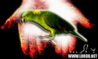 épaule bec de perroquet